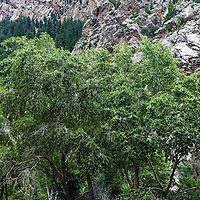A spectacular, but relatively unknown canyon park, very popular with residents of Boulder Colorado. A magnificent small canyon with all the attributes of a great canyon