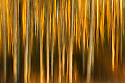 Abstract of trees