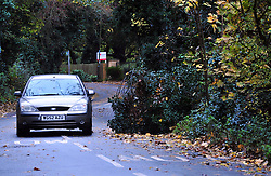 © Licensed to London News Pictures. 20/11/2016<br /> Partly fallen tree across the road because of Storm Angus overnight in Sandy Lane, Orpington,Kent.<br /> <br /> Photo credit :Grant Falvey/LNP