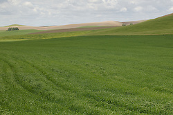 Layers of fields, including grasses, wheat, and dirt, line the hillside of the Palouse, Washington.
