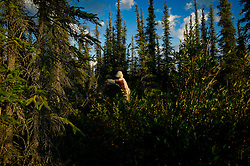 """Brendan Felix Head, 14, cuts wood for a campsite as First Nation Dene youth finish their trip from the Upper Thelon River, where their ancestors believe is """"the place where God began.""""  Sparsely populated, today few make it into the Thelon. Distances are simply too far, modern vehicles too expensive and unreliable. For the Dene youth, faced with the pressures of a western world, the ties that bind the people and their way of life to the land are even more tenuous. Every impending mine, road, and dam construction threatens to sever these connections. In July and August, 2011 a group of youth paddled to their ancestral hunting ground and spiritual abode.  this next generation of young leaders will be the ones who will need to speak for the Thelon the loudest. (Photo by Ami Vitale)"""