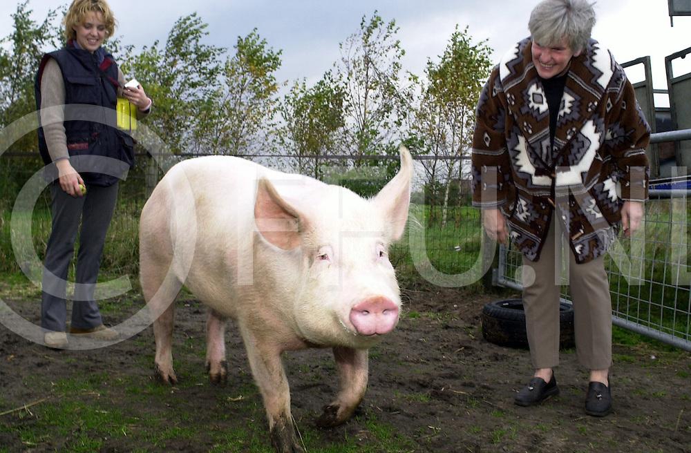 fotografie frank uijlenbroek&copy;2004 michiel van de velde<br />041025 dalmsholte ned<br />Uitbreiding met een varken bij 't Olde Manegepeerd waar vandaag het grote kolos werd gebracht door de Dierenbescherming Almelo waar Rika (R) toekeek hoe het dier zich thuisvoelde.