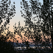 Trees and sunset over the Great Salt Lake, Utah  April 26, 2006