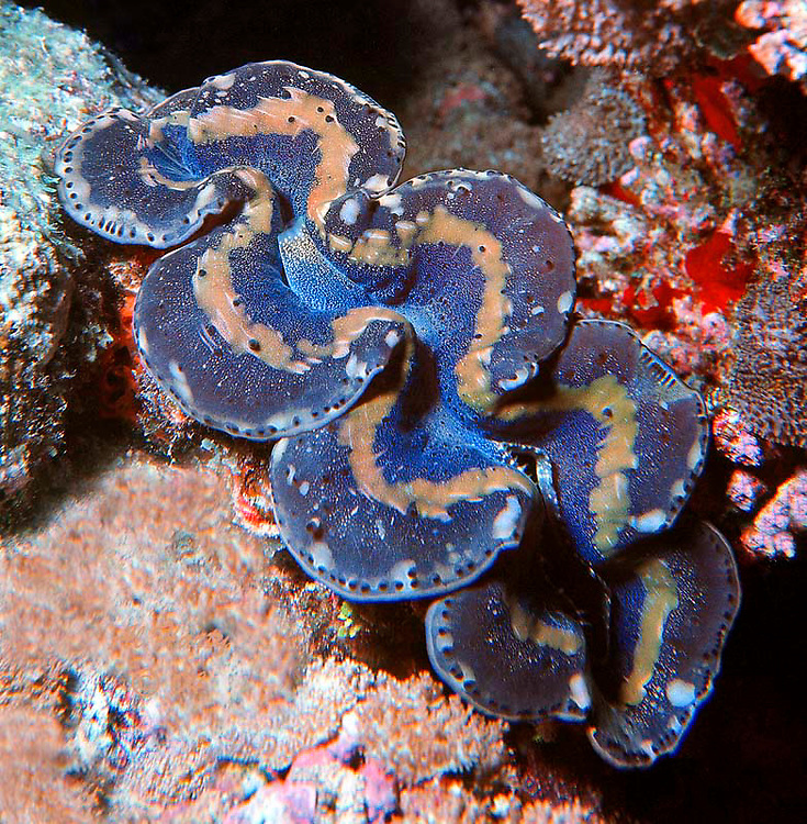 Another great color combination. Ocean Life is Al Harty's underwater photo series of sea life located mostly at Kwajalein Atoll, Marshall Islands.on!