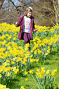 UNITED KINGDOM, London: 05 April 2018 Ruby Kombou, aged 7, takes a walk through the daffodils at Kew Gardens this afternoon. After a miserable week of rain, the sun is set to shine throughout the day. Rick Findler / Story Picture Agency