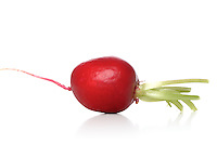 Studio shot of radish on white background