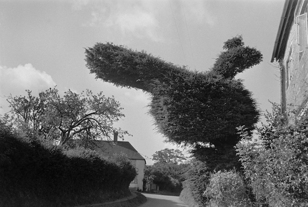 """""""Rag"""", Large Topiary in Front of House, London, 1935"""
