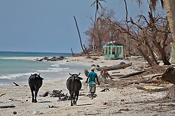 A man walks his livestock on the storm battered beach in Port Salut, Haiti, on October 11, 2016. Photo by Patrick Farrell/Miami Herald/TNS/ABACAPRESS.COM