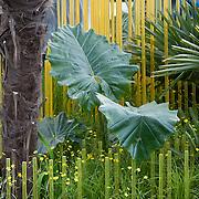 Chelsea Flower Show 2015 Garden 1