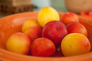 Plums in a summer cottage, Little Compton, Rhode Island.