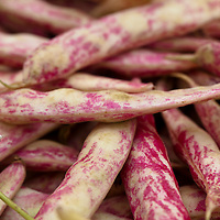 Red and yellow streaked Dragon Tongue beans also known as  'Dragon Langerie' snap bean.