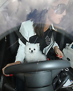 11.MAY.2013. ESSEX<br /> <br /> LUCY MECKLENBURGH AND HER DOG SEEN WORKING AT HER SHOP IN BRENTWOOD ESSEX. LUCY WAS SEEN LOOKING TIRED AND WAS SEEN YAWNING BEHIND THE COUNTER. LUCY LEFT IN HER WHITE BMW WITH HER DOG ON HER LAP AS SHE DROVE AWAY FROM HER SHOP. <br /> <br /> BYLINE: EDBIMAGEARCHIVE.CO.UK<br /> <br /> *THIS IMAGE IS STRICTLY FOR UK NEWSPAPERS AND MAGAZINES ONLY*<br /> *FOR WORLD WIDE SALES AND WEB USE PLEASE CONTACT EDBIMAGEARCHIVE - 0208 954 5968*
