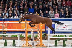 172, My Choice<br /> KWPN hengstenkeuring - 's Hertogenbosch 2020<br /> © Hippo Foto - Dirk Caremans<br /> 29/01/2020