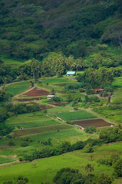 Taro fields in Waipio Valley; Hamakua Coast, Island of Hawaii..#0604909