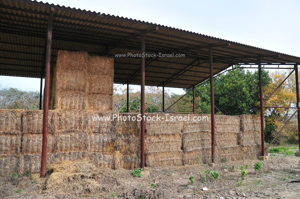 Bales of hay in a shed on a dairy farm on a Kibbutz in Israel