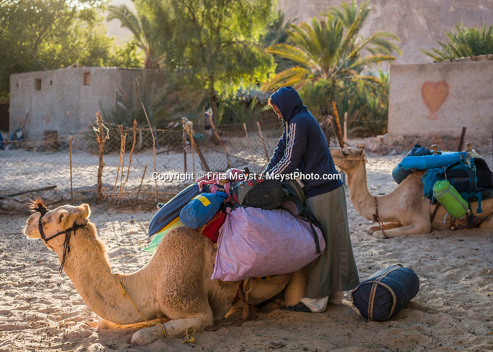 Sinai, Egypt, December 2018. Ein Hudera Oasis while hiking with the Tarabin Tribe through the Sinai Desert Coastal Ranges. The Sinai Trail is Egypt's 1st long distance hiking trail, running 230km from the Gulf of Aqaba to the top of the Sinai's highest mountain. It connects old trade, travel and pilgrimage routes through one of the Middle East's most iconic desert wildernesses and is managed by a cooperative of three Bedouin tribes. Photo by Frits Meyst / MeystPhoto.com
