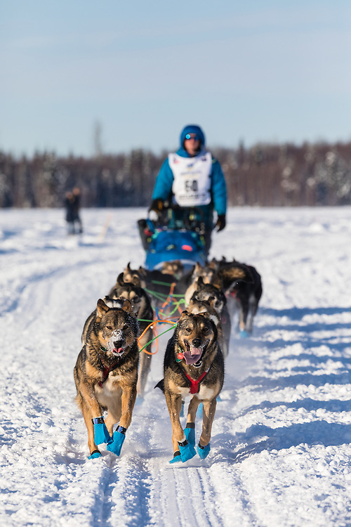 Musher Travis Beals after the restart in Willow of the 46th Iditarod Trail Sled Dog Race in Southcentral Alaska.  Afternoon. Winter.