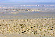 GOBI DESERT, MONGOLIA..08/27/2001.Bugiin Tsav. View over a giant depression valley that used to be a river bed in ancient times. Camels in the distance..(Photo by Heimo Aga).