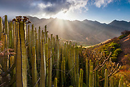 Canarian Islands landscape