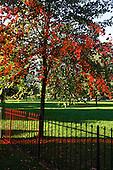 Urban Trees