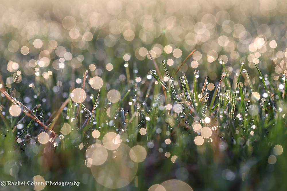 &quot;Refreshing&quot;<br /> <br /> A refreshingly beautiful abstract of nature!