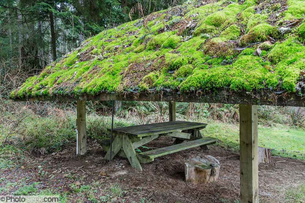 Moss covered picnic shelter, table, Meerkerk Rhododendron Gardens, Whidbey Island, Washington, USA.