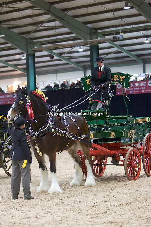 Ron Brewster driving Walton Bomber for Wendy Toomer-Harlow's Eversley Shires<br />