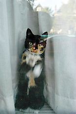 Katten, cats, animals, dieren