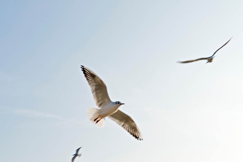 drei Möwen - drei,three, seagull, Möwe,seagulls