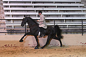 77 WH Open Specialty Grand Championship