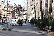 Christmas trees line up on Columbus Avenue in Manhattan's Upper West Side neighborhood in early December.