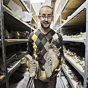 Ian Stewart/Yukon News<br /> Grant Zazula holds a mammoth jaw in the storage room of the Yukon Paleontology Collection.