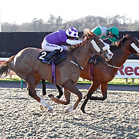 Grey Mirage and Martin Harley winning the 2.35 race