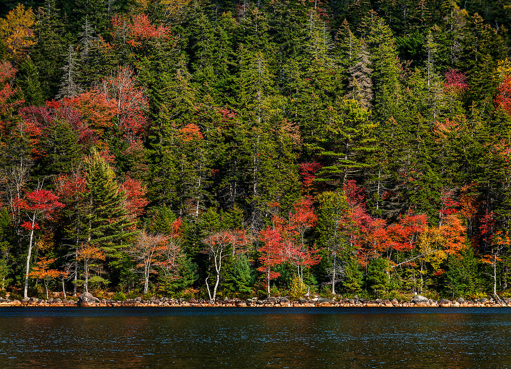 Warm glow on the trees, Acadia National Park