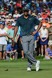 August 9, 2018 - Town And Country, Missouri, U.S - WOODS, TIGER] from Jupiter Florida, USA watches others putt on the 14th green during round one of the 100th PGA Championship on Thursday, August 8, 2018, held at Bellerive Country Club in Town and Country, MO (Photo credit Richard Ulreich / ZUMA Press) (Credit Image: © Richard Ulreich via ZUMA Wire)
