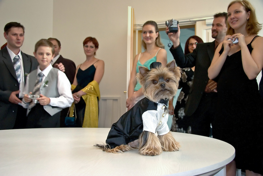 Dog with tails and top hat during a Czech - Slovak wedding in Prague.