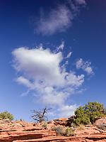 https://Duncan.co/utah-juniper-and-sky