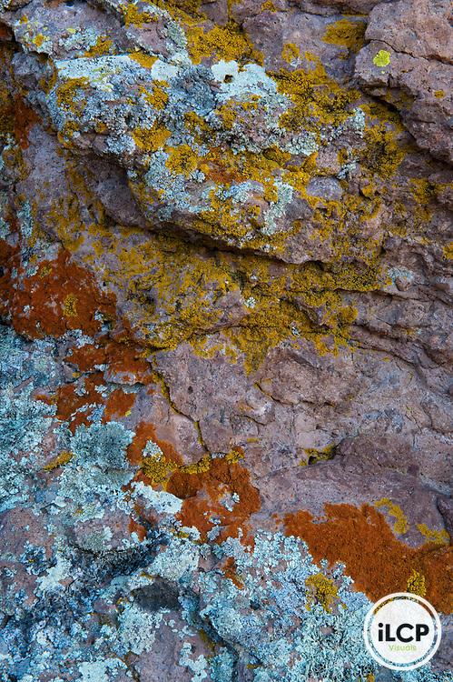 Lichen and ferns on granite rock.