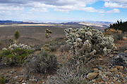 Landscape at Joshua Tree National Park