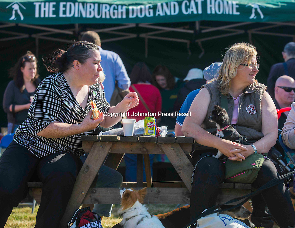 Agnes Murphy getting a lot of attention while eating her burger from Chihuahua's Charlie Bucket and Miss Mouse.<br /> <br /> Edinburgh Cat and Dog Home open day. <br /> 6th September 2015<br /> <br /> picture by Alex Hewitt<br /> alex.hewitt@gmail.com<br /> 07789 871 540