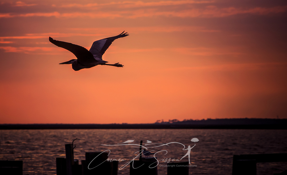A pelican flies over Heron Bay at sunset at the Heron Bay Cutoff in Coden, Alabama, May 2, 2014. (Photo by Carmen K. Sisson/Cloudybright)