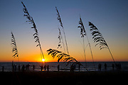 Sea oats on the beach at sunset on Captiva Island in Florida, USA