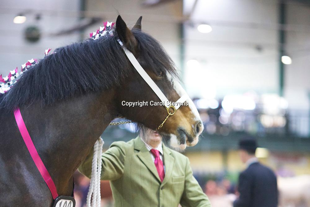Mr N Andrews's MANOR FARM MONDAY GIRL  f 2006  (No.100)<br /> Sire Trem-Y-Wyddfa Mascot<br /> Dam  Manor Farm Lady of the Knight<br /> Breeder  H S &amp; A Callwood