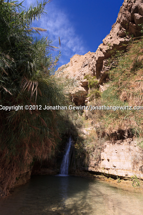 A small waterfall in Nahal David in the Ein Gedi nature preserve. WATERMARKS WILL NOT APPEAR ON PRINTS OR LICENSED IMAGES.