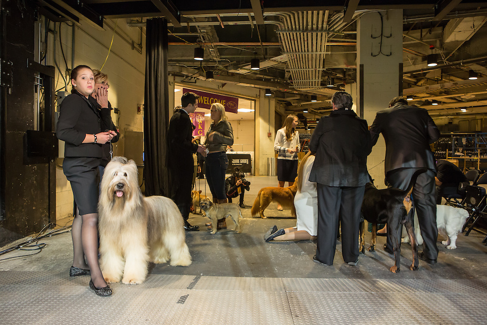 New York City, US, 12 February 2013. KayCee Klang, on the left with her Briard Cagney, waits in the wings for the Junior Showmanship finals.