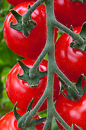 Garden & food