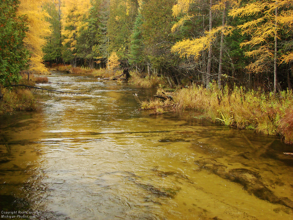 Jordan River and Tamarack Trees