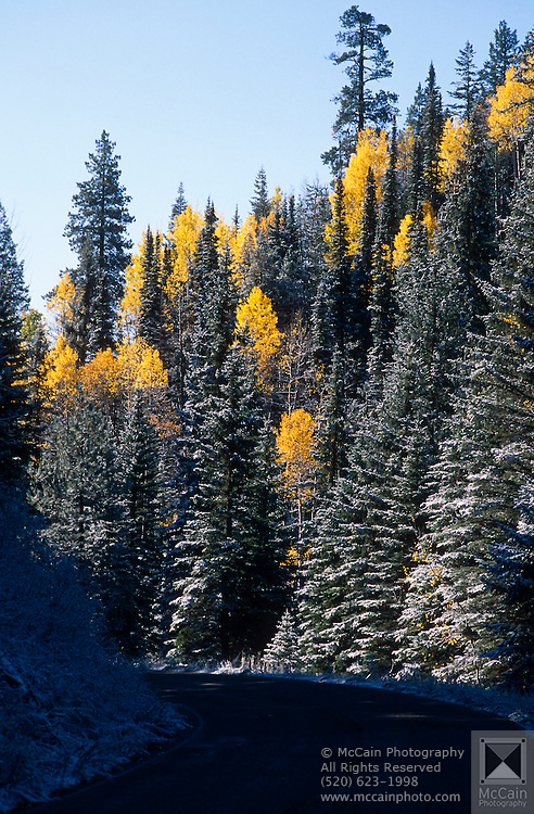 Snow Frosting on Aspens and Spruce trees, North Rim, Grand Canyon National Park, Arizona...Subject photograph(s) are copyright Edward McCain. All rights are reserved except those specifically granted by Edward McCain in writing prior to publication...McCain Photography.211 S 4th Avenue.Tucson, AZ 85701-2103.(520) 623-1998.mobile: (520) 990-0999.fax: (520) 623-1190.http://www.mccainphoto.com.edward@mccainphoto.com.