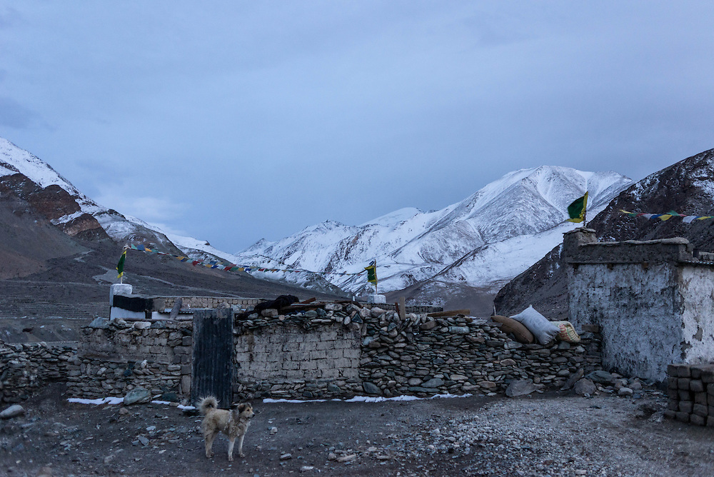 A Tibetan mastiff stands guard outside the nomadic community of Sumdho on Ladakh's Changtang plateau.