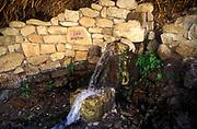 Ein Gedi sweet water springs, in the Judean desert, Israel, Shulamit Spring in Wadi David nature reserve